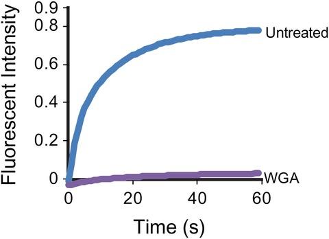Figure 6—figure supplement 2.