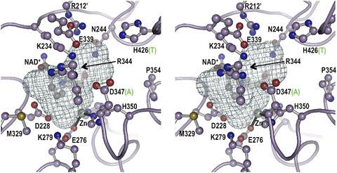 Figure 1—figure supplement 6.