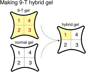 Figure 6—figure supplement 1.