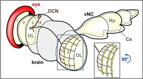 Figure 3—figure supplement 2.