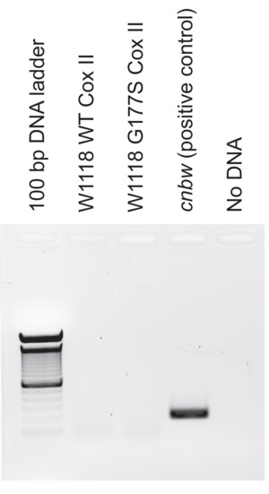 Figure 1—figure supplement 1.