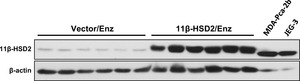 Figure 4—figure supplement 1.