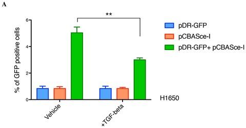 Figure 4—figure supplement 2.