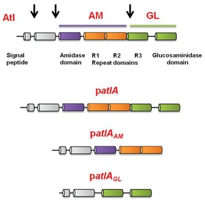 Figure 3—figure supplement 1.